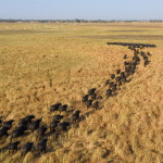 Kafue National Park is the largest national park in Zambia, covering an area of about 22,400 km² (similar in size to Wales or Massachusetts). It is the second largest park in Africa and is home to over 55 different species of animals.  The park is named for the Kafue River. It stretches over three provinces: North Western, Central and Southern. The main access is via the Great West Road from Lusaka to Mongu which crosses the park north of its centre. Seasonal dirt roads also link from Kalomo and Namwala in the south and south-east, and Kasempa in the north.